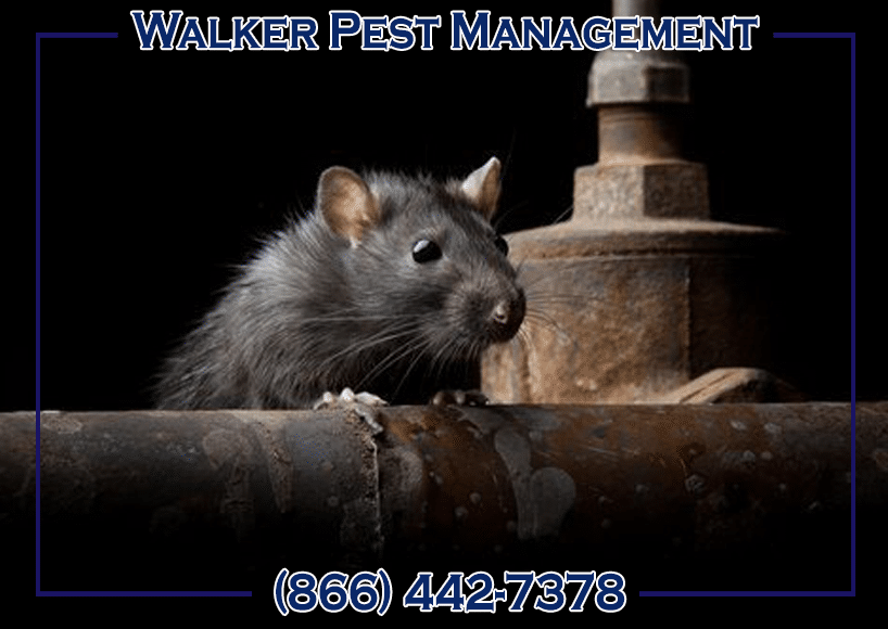 Walker Pest Management rodent control