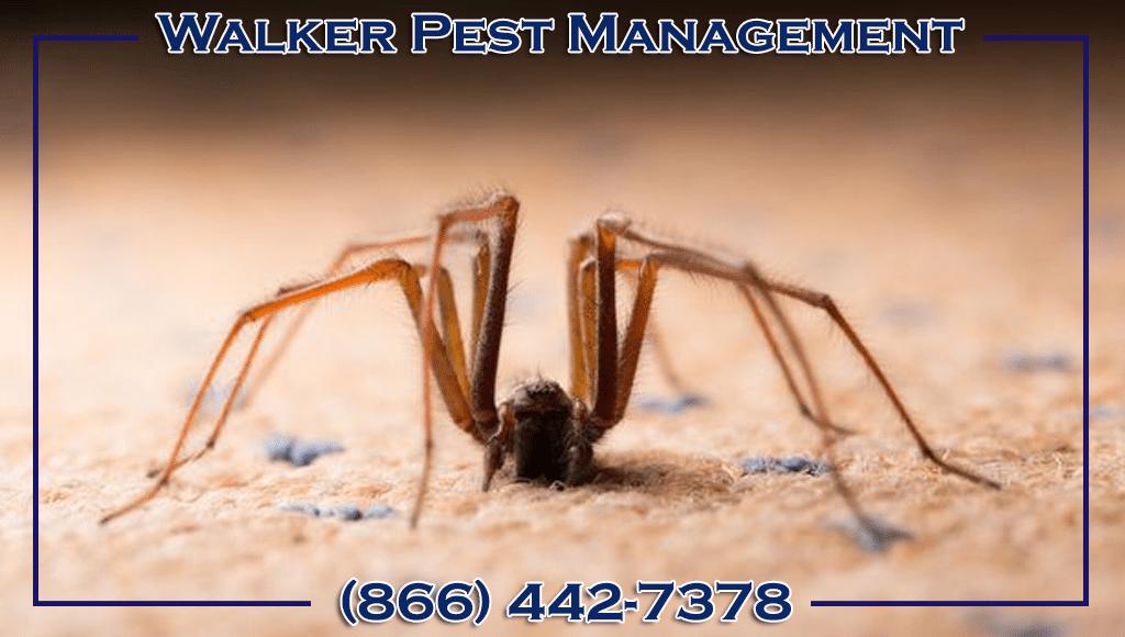 Walker Pest Management spider on floor ad
