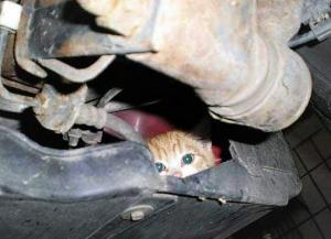 Make Sure You Check Your Engine Compartment After A Cold Night
