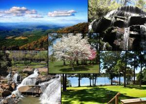 Spring Pest Control Services for South Carolina Homeowners