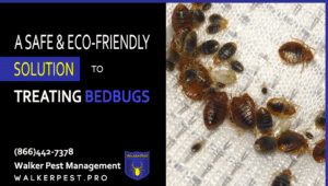 Who Treats Bed Bugs In My Area?