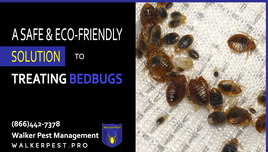 Bed Bugs – What to look for.