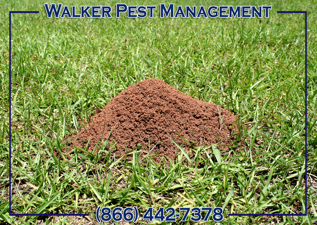 pest control for fire ants - fire ant control