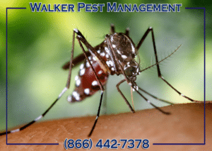 Heat & Humidity The Perfect Storm For Pests