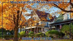 Fall Pest Control Tips