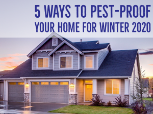 5 Ways To Pest-Proof Your Home For Winter 2020